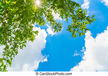 Beautiful trees branch on blue sky . - Beautiful trees...