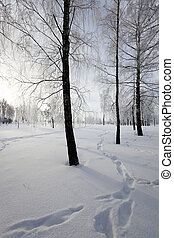 trees in winter - deciduous trees, photographed during the...