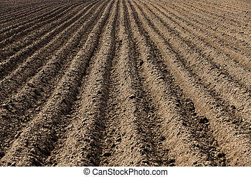 plowed land, furrows - agricultural field that was plowed...