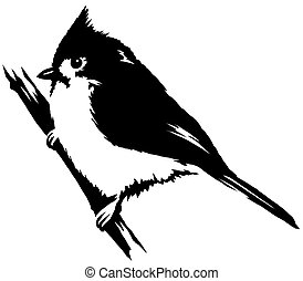 black and white linear paint draw cardinal bird illustration...