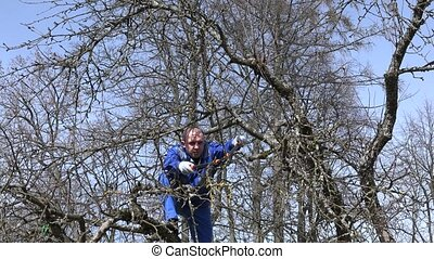 Professional gardener trimming apple tree branches with...