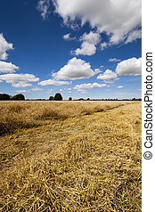 harvest of cereals - agriculture - agricultural field where...