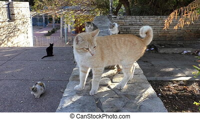 Male cats fighting on the street