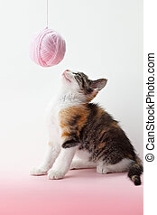 cat playing with yarn - tricolor female kitten playing with...