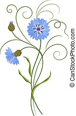 Bunch of blue cornflowers isolated on white. Vector...