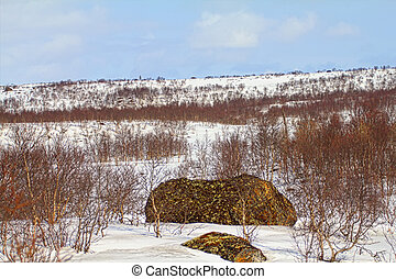 Mountain tundra of Lapland in spring. Snow-covered expanse and birch elfin