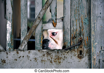 Captured Dog - A sad dog looking at the street behind the...