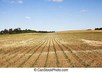 cracked earth in the field - Agricultural field nak this...
