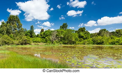 Lily Lake in Karura Forest - Timelapse sequence of the...