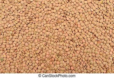 lentil seeds texture - green lentil plant dry seeds texture...