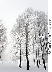 park in winter - trees growing in the park in winter