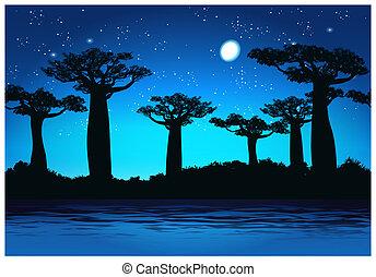 Baobab trees At night - Illustration Baobab trees at night....