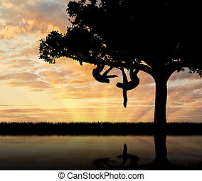Pair sloths animals in a tree over the river at sunset