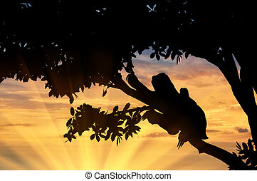 Sloth animal with a toddler in a tree on the sunset...