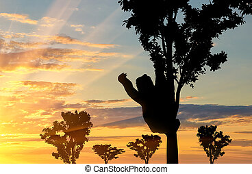 Sloth animal on the tree on the sunset background
