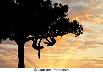 Pair sloths animals in a tree on sunset background
