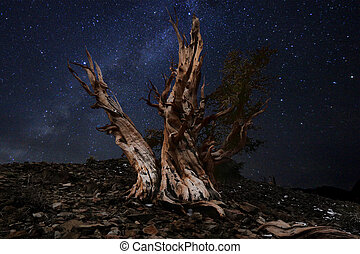 Light Painted Landscape of Stars in Bristlecone Pines -...