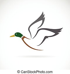 Vector image of an flying wild duck design on white...
