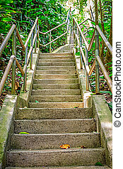 Ascending Jungle Stairs - Stairway through the lush jungle...