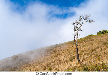 Lonely tree on the mountain at Kew mae pan nature trail, Doi...