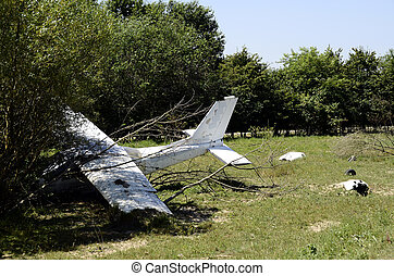 White crashed plane on ground and trees