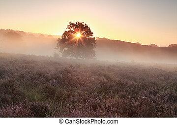 misty sunshine on heathland in summer, Gelderland,...