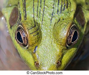 宏, 人物面部影像逼真, 牛蛙