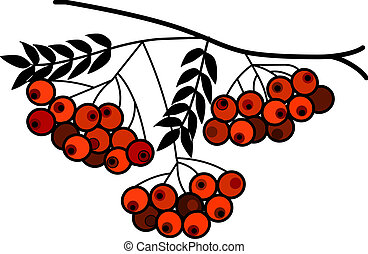tree branch with red fruits on  white background, vector illustration
