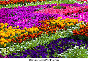 Field of different flowers - Background of the flowers,...