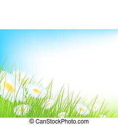 camomile field with blue sky and copyspace for your text