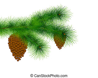 fir tree branch with cones over white
