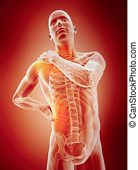 highlighted parts of the human body - medically accurate 3d...