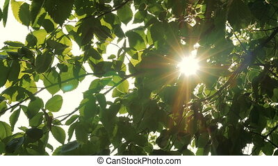 Sun shines through green leaves