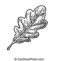 Oak leaf. Vector vintage engraved illustration.
