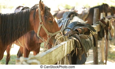 Horses in the stall - several horses tied to a pole