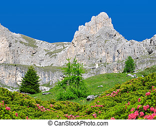 Valle del Vajolet in Dolomites - Beautiful mountain...
