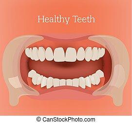 Healthy teeth image - Healthy teeth illustration Vector...