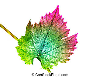Grape leaf in strange color isolated on white