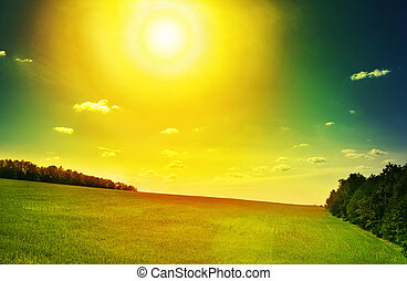 lanscape in yellow sun - Green herb lanscape in dramatic...