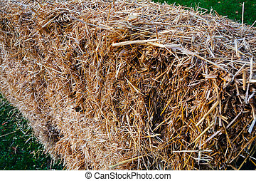 thatch on the meadow, note shallow depth of field