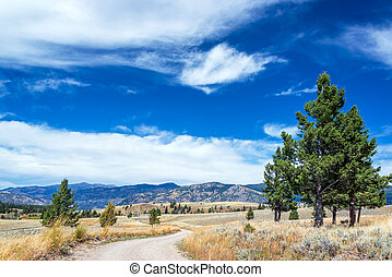 Yellowstone Landscape and Dirt Road - Dirt road and...