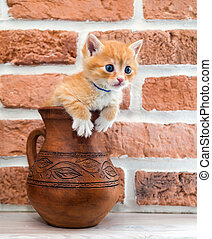kitten, curiosity - Curious kitten tries to get out of the...