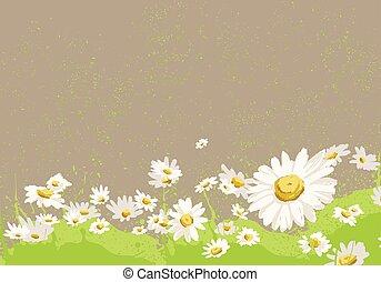 bright chamomile field - bright colorful chamomile field...