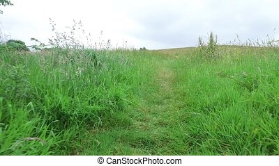 summer field and path 58 - nature and environment concept -...
