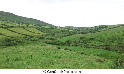 farmland field at wild atlantic way in ireland 75 - nature,...