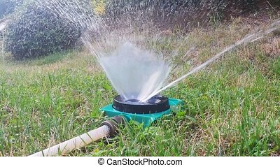 water sprinkler watering lawn - water sprinkler watering...