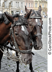 Pair of brown horses harnessed to a carriage