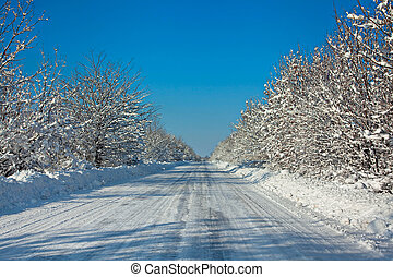 Snow-covered road with tree