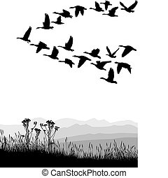 Migrating geese in the autumn - Black and white illustration...
