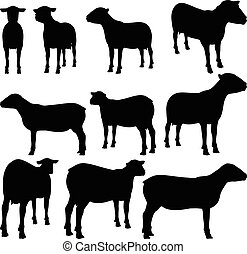 sheep collection vector silhouette